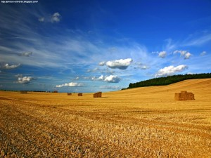 beautiful-landscape Field-wallpapers