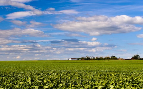 Farmers crop field on sunny day